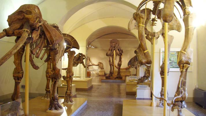 museo-storia-naturale